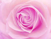 Pink rose heart closeup Stock Photos