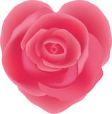 Pink rose,heart shaped Stock Images