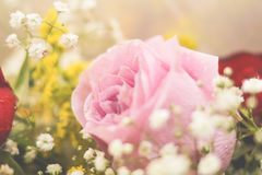 Pink rose - high detailed. Romantic pink rose from a gift Stock Image