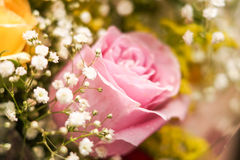 Pink rose - high detailed. Romantic pink rose from a gift Stock Photos