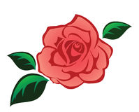 Pink rose illustration  on white. Pink rose with leaves illustration  on white Stock Image