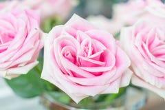 Free Pink Rose In Vase Stock Image - 115696701