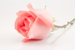 Pink rose isolated Royalty Free Stock Images
