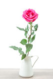Pink Rose isolated Stock Image