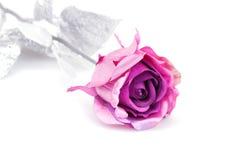 Pink rose. Isolated on white background Royalty Free Stock Image