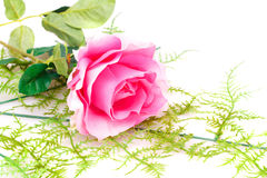 Pink rose. Isolated on white background Stock Photo