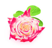 Pink rose isolated on white background closeup Stock Photography