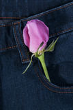 Pink rose in the jean pocket Stock Image