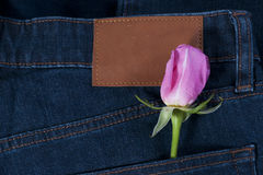 Pink rose in the jean pocket Stock Photo