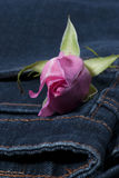 Pink rose in the jean pocket Royalty Free Stock Photography