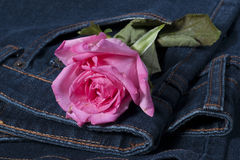 Pink rose in the jean pocket Stock Photos