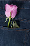 Pink rose in the jean pocket Stock Photography