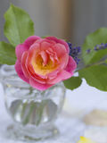 Pink rose with leaves in a glass vase Stock Images