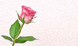 A pink rose and love hearts Royalty Free Stock Images