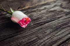Pink rose lying on a wooden table Royalty Free Stock Images