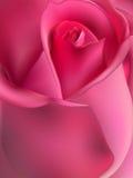 Pink rose macro. EPS 10 Stock Images