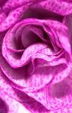 Pink rose macro in spring Royalty Free Stock Images