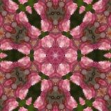 Pink rose mandala Stock Image