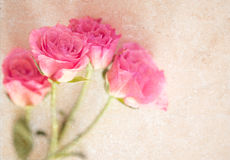 Pink Rose Marble Collage Background Stock Photos