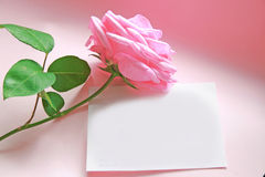 Pink rose message. Pink rose with green leaves laid over a blank white note card on romantic pink background. Fit for love, valentines, occasion, engagement Royalty Free Stock Photography