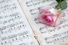 Pink rose on music notes Stock Photos