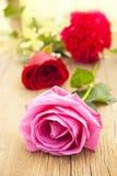 Pink rose. Nice romantic gift Royalty Free Stock Image