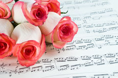 Pink rose and note royalty free stock photos