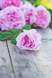 Pink rose. And on the old boards Royalty Free Stock Photos