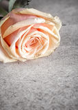 Pink rose on old letter Royalty Free Stock Image