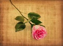 Pink rose on old paper vector illustration
