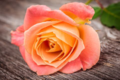 Pink rose on old  wooden table Stock Image