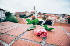 Free Pink Rose On Red Brick With Blured Cesky Krumlov Castle Royalty Free Stock Photos - 87069468