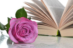 Open Book Flower Royalty Free Stock Image