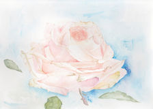 Pink Rose. Original Watercolour illustration of a morning rose flower on a abstract background Stock Photos