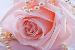 Pink rose and pearl necklace. Soft pink rose with a pearl necklace Royalty Free Stock Photo
