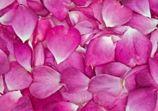 pink Rose petal background Royalty Free Stock Photos