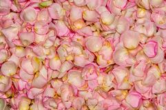 Pink rose petal background Royalty Free Stock Photo