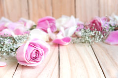 Pink rose and petal Royalty Free Stock Images