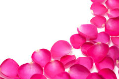 Pink rose petals isolated on the white Royalty Free Stock Image