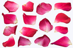 Pink Rose petal set isolate on white background royalty free stock photos