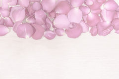 Pink rose petal on wooden background Royalty Free Stock Photo