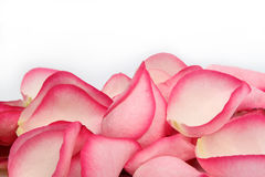 Pink rose petals. Closeup of pink rose petals isolated on white background Stock Photos