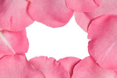 Pink rose petals Royalty Free Stock Image