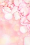 Pink rose petals. Border, frame stock images