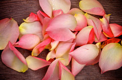 Pink Rose Petals Royalty Free Stock Photography