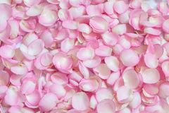 Pink rose petals. Background Royalty Free Stock Image