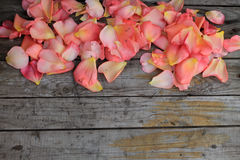 Pink rose petals on background of old wooden surface. Copy space Stock Photo
