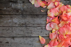 Pink rose petals on background of old wooden surface. Copy space Royalty Free Stock Photo