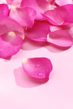 Pink rose petals Royalty Free Stock Images