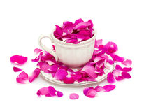 Pink rose petals in a beautiful tea cup Royalty Free Stock Images